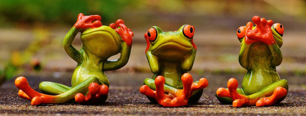 frogs-1274769_1280